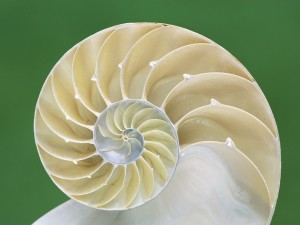 Chambered_Nautilus_Shell